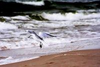 Ptaki nad morzem