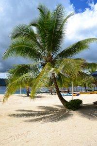 Nie masz pomysłu w jakim miejscu spędzić tegoroczne wakacje? Wybierz się na Majorkę!